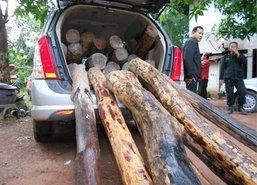 รองผวจ.อุบลลุยจับรถหรูขนไม้พะยูงร่วมล้าน