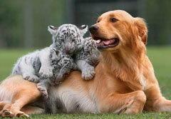 """ภาพประทับใจ! สัตว์โลกในบทบาท""""พ่อแม่จำเป็น"""""""
