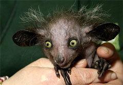 รวมภาพ! สัตว์หน้าตาน่าเกลียดที่สุดในโลก