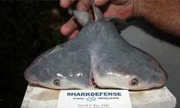 """ฮือฮา พบ""""ฉลามสองหัว""""เชื่อเป็นครั้งแรกของโลก"""