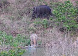 ราชินีทรงห่วงช้างเผือกรับสั่งดูสัตว์คู่บ้านเมืองให้ดี
