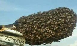 แห่ขอหวยเลขเด็ด! ผึ้งทำรังแฮนด์รถไถ
