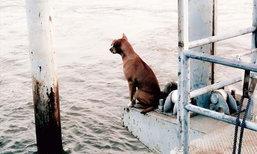น้องหมา ผู้ซื่อสัตย์นั่งรอเจ้าของที่ท่าน้ำนานเกือบเดือน