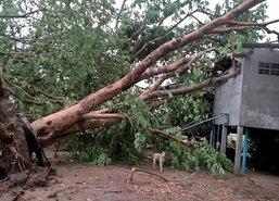 พายุถล่มพิจิตรบ้านเรือนปชช.เสียหาย69หลัง