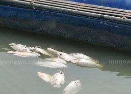 อ่างทองร้อนเจ้าพระยาแล้งปลากระชังตาย