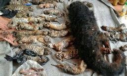 จนท.อุทยานฯผงะพบซากลูกเสือโคร่ง 40 ซาก แจ้งความเพิ่มพร้อมนกเงือก 6 ตัว-สิงโต 1