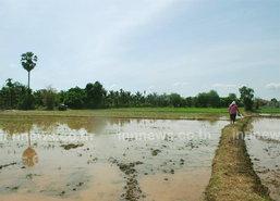 ปภ.ขอเกษตรเลื่อนทำนาปีจนฝนตกตามปกติ