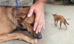 ชาวเน็ตเมืองจีนตามล่า คนอำมหิตยิงธนูปักใส่ท้องหมา