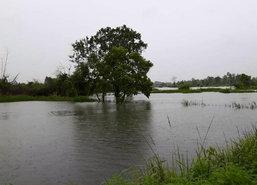 ดุสิตโพลปชช. 86.69%กังวลน้ำท่วมทำเกษตรเสียหาย