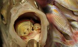 สยอง! สาวจีนซื้อปลาเจอสัตว์ประหลาด แมงกินลิ้น ซ่อนตัวในปาก