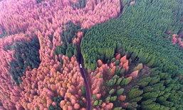 สวยสะดุดตา ภาพถ่ายทางอากาศป่าไม้หลากสีสันในอุทยานนครฉงชิ่ง