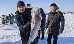 เริ่มกันแล้ว! เทศกาลจับปลาฤดูหนาวที่ทะเลสาบฉากัน ประเทศจีน