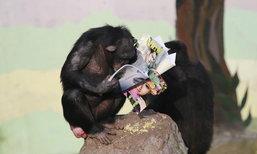 นักท่องเที่ยวถูกใจ ชิมแปนซีในสวนสัตว์เมืองจีนอ่านหนังสือ