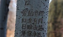 หนุ่มแกะคำสารภาพรักบนต้นไม้กว่า 19 ต้น นานถึง 4 ปี
