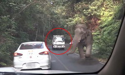 คลิประทึก  โชเฟอร์ 6 ล้อขับรถไล่ต้อนช้างป่า!  คันอื่นผวาหวั่นโดนช้างเหยียบ