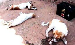 คนใจบาปวางยาเบื่อสุนัขในวัดตาย 4 ตัว ชาวบ้านช่วยชีวิตรอด 2 ตัว
