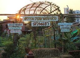สวนผักพิษณุโลกให้ลูกค้าเก็บเองเหมาโลละ20บ.