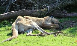 สวนสัตว์ชื่อดังในอังกฤษถูกสั่งปิด หลังทำสัตว์ตาย 500 ตัว ในเวลาเพียง 3 ปี