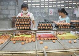 พ่อค้าไข่ไก่โคราชโวยอากาศร้อนจัดทำให้ไข่เน่าเสีย