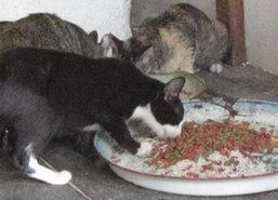 อ่างทองวอนช่วยแมวกว่า30ตัวคนเลี้ยงเสียชีวิต
