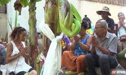 แห่ขอโชค 2 ต้นกล้วยประหลาด ปลีออกกลางต้น-คล้ายคนท้อง