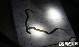 ชายจีนผวาโทรแจ้งเหตุ มีงูเข้าบ้าน จนท.ไปแทบเงิบ