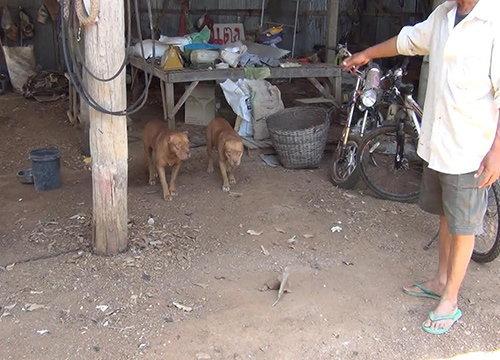 เจ้าของพิตบูลล์เตรียมย้ายสุนัขหลังกัดสาวใหญ่