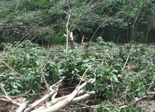 พายุงวงช้างพัดถล่มระยองบ้านเสียหาย30หลัง