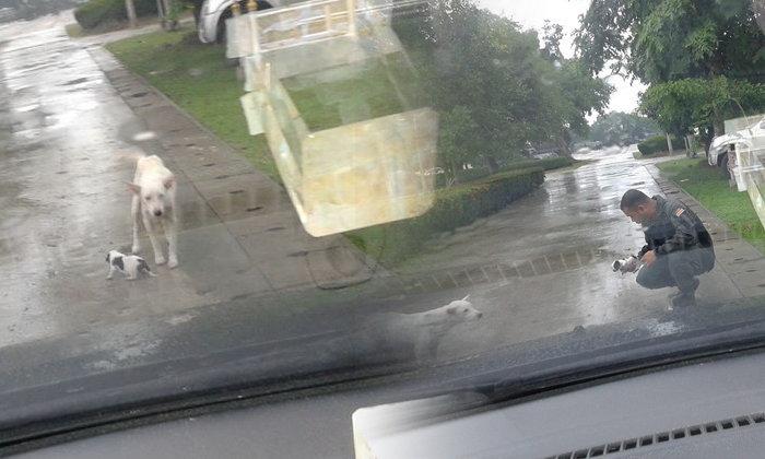 ตำรวจอึ้ง แม่หมาคาบลูกขวางรถ ที่แท้มาขอความช่วยเหลือ