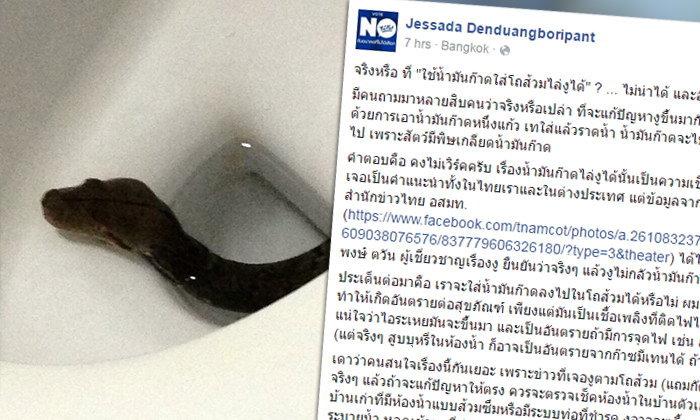 อ.เจษฎา แนะวิธีป้องกันงูโผล่ชักโครก ชี้ราดน้ำมันก๊าดอันตราย