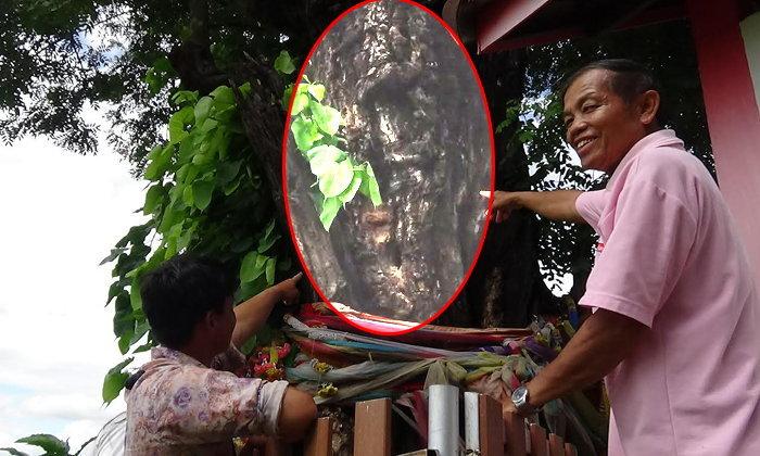 ฮือฮาเลขเด็ดต้นขี้เหล็กอายุพันปี มีรูปคล้ายหน้าพระพุทธรูปปรากฏ