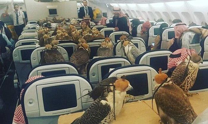 ฮือฮา! เจ้าชายซาอุฯทุ่มหนัก ซื้อที่นั่งบนเครื่องบินให้เหยี่ยว 80 ตัว