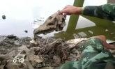 พบกะโหลกสัตว์จำนวนมากถูกทิ้งในคลอง จ.พระนครศรีอยุธยา