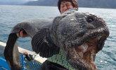 """ไม่เคยเจอ! ชาวประมงจับ """"ปลาประหลาด"""" ในท้องทะเล ผงะเป็นพันธุ์ """"ปลาหมาป่า"""""""