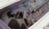 ชาวอ่างทองแห่ดู! แม่แมวย่องคลอดลูกในโลงศพแก้ปีชง