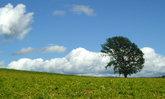 ต้นไม้ Tree of Philosophy ที่ฮอกไกโดถูกโค่น เหตุเพราะคนไทย