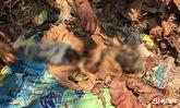 ชาวบ้านผงะ! จะส่องหาอึ่งอ่าง เจอศพทารกผุดขึ้นมาจากป่าช้า