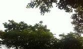 ไทยยังมีร้อนจัดเหนืออีสานฝนฟ้าคะนองลมแรง