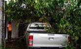 ฝนตกลมแรงในจ.พัทลุงทำต้นไม้ล้ม-น้ำป่าหลาก