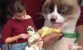 """""""เจ้าน้ำตาล"""" แมวตัวสวยสุดอินเทรนด์ ชอบกินทุเรียนมาก"""