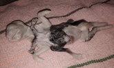 ฮือฮา แมวคลอดลูก 8 ขา คอหวยเศร้าแม่คาบซากลูกหายไป