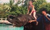 """โลกตามหา """"นิ๊งหน่อง"""" ช้างที่ช่วยชีวิตเด็กหญิงรอดจากสึนามิ"""