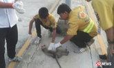 รถปิกอัพชนลูกลิงหลงฝูง ตายต่อหน้าต่อตาชาวบ้านนับสิบ