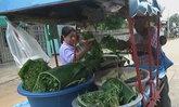 ลุงสุโขทัยวัย70ปลูกผักสวนครัวปลอดสารพิษ