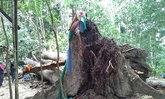 พัทลุงฝนตกลมแรงลงพัดต้นไม้ทับกุฏิพระเจ็บ
