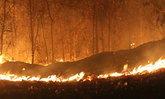 ไฟไหม้ป่ารัฐแคลิฟอร์เนียสังเวยแล้ว4ศพ