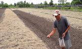 ชาวนาโคราชหันปลูกผักชีลาวแทนข้าวนาปี