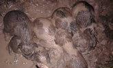 หัวใจหล่อมาก! หนุ่มยอมฝ่าฝนกลางดึก ช่วยลูกหมา 7 ตัว จมโคลน
