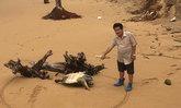 คลื่นอันดามันแรงซัดเต่าหญ้าตายเกยหาดพังงา