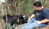อช.กุยบุรีขอรับบริจาคอาหารให้หมีควายป่วย